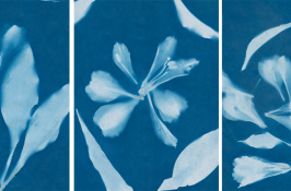 Alternative Processes | Cyanotype Workshop